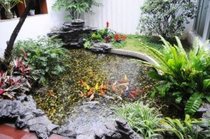 Controlling Algae in a Pond