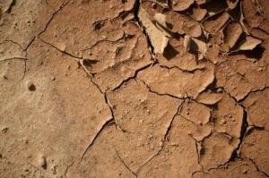 Growing Plants in Clay Soil