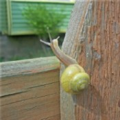 Snail on fence
