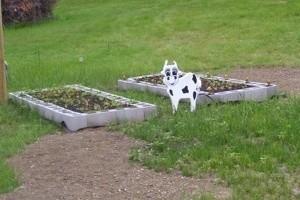 Planting In Cinderblocks