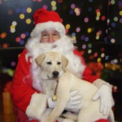 Sadie Rose with Santa (Yellow Labrador Retriever)