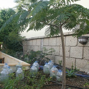 Plastic bottles covering plants in garden.