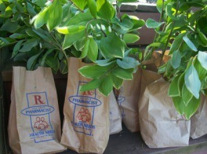 Paper bags for plant divisions.