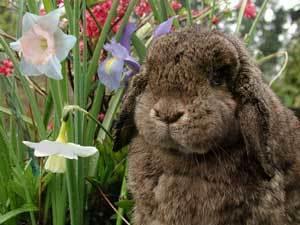 Litter Training a Rabbit
