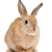 House Training a Rabbit