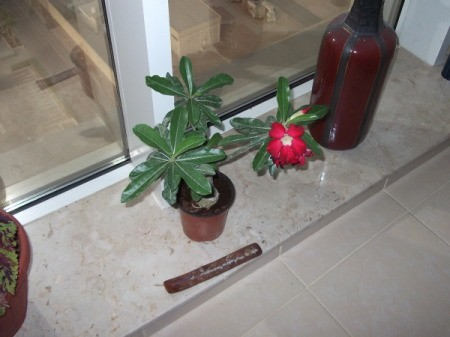 Plant with green leaves and red flower.