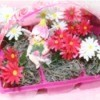 """Recycled """"Wave"""" Petunia Baskets"""
