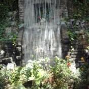 Waterfall in rainforest exhibit.