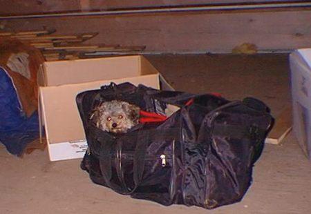 Ellie Mae in duffle bag.