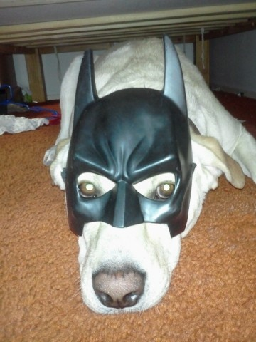 Lab with Batman mask.