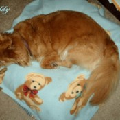 Buddy on a baby blanket