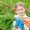 Child holding bunch of carrots