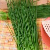 Preserving Fresh Chives