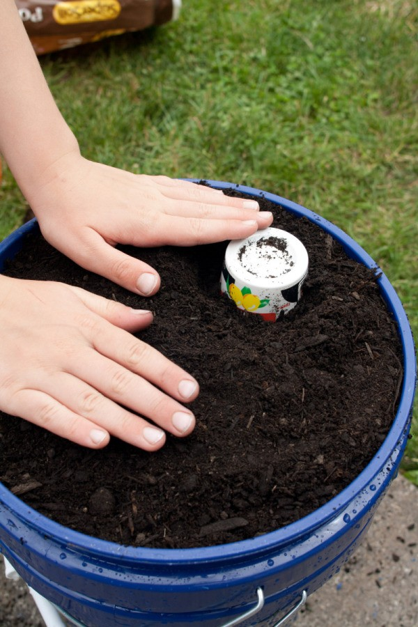 Adding Potting Soil to Bucket