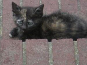 A calico cat lying on bricks