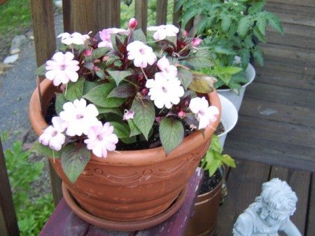 Potted Flowers For Mother's Day