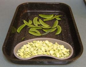 Hospital Tray With Food