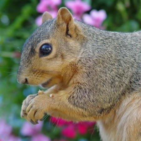 Keeping Squirrels from Digging in Plants | ThriftyFun