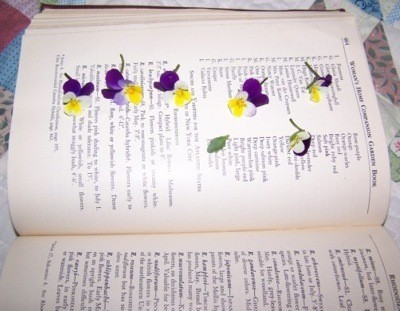 How to press flowers thriftyfun pansies being pressed in a large book mightylinksfo