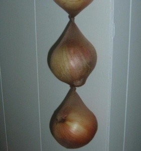 Pantyhose being used to store onions.