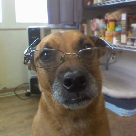 Belle in one of her more studious moments.