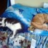 Cats asleep.