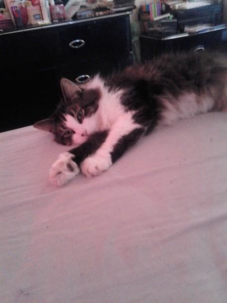 Black and white cat on floor.