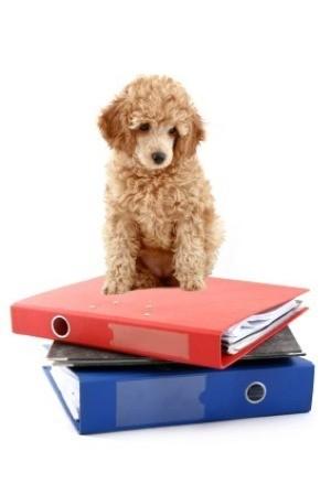 Organizing Pet Records