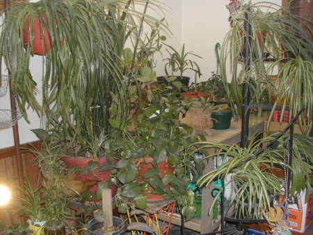 Lots of potted plants.