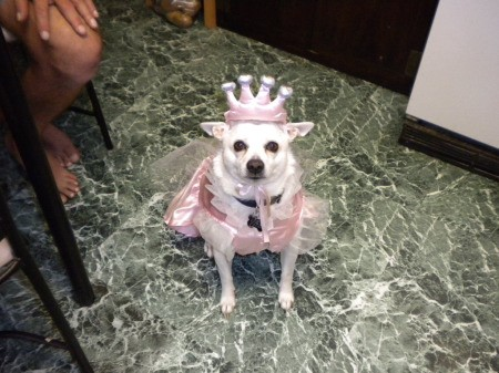 Dog wearing a princess costume.