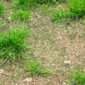 Tired Lawn