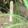Popsicle Stick Plant Marker