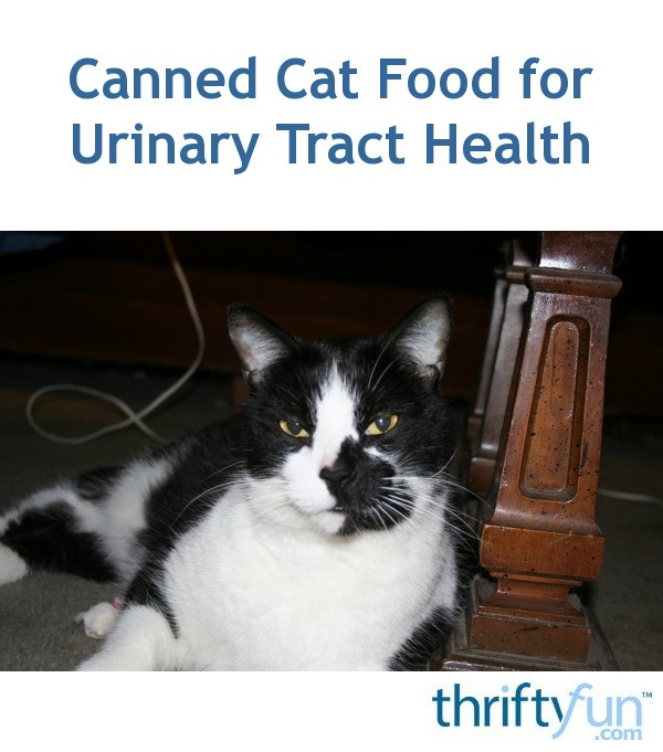Canned Cat Food For Urinary Tract Health Thriftyfun