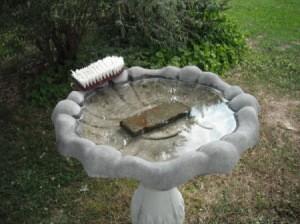 Keep Birdbath Clean