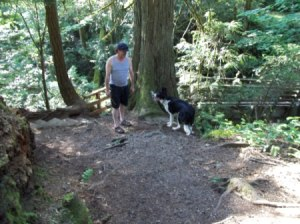 Dog on forest trail.