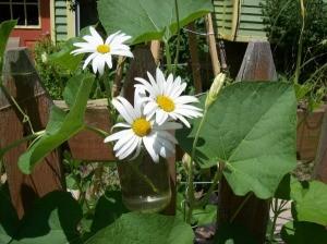 Cut Shasta daisies in hanging jar.