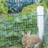 Rabbit Prevented From Getting in Garden By Fence