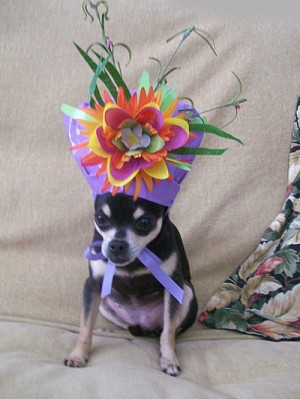Dog With New Year's Hat
