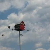 Birds flying around a birdhouse (Marietta, OH)