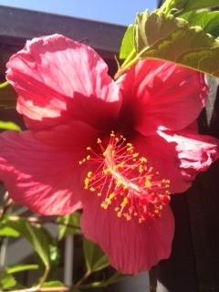 Dark pink flower.