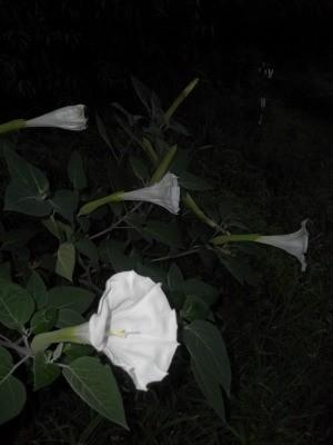 Several flowers blooming.