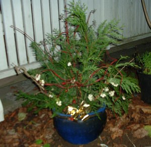 flower pot filled with gathered greens as a decoration - Outdoor Christmas Decorations Nj