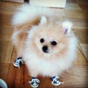 Pom in sneakers.
