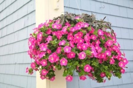 Watering Hanging Plants