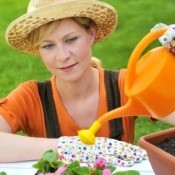 Tips for Watering Plants