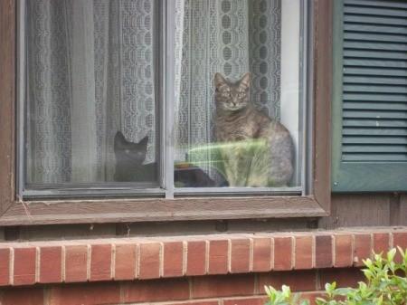 Kitties in the window.