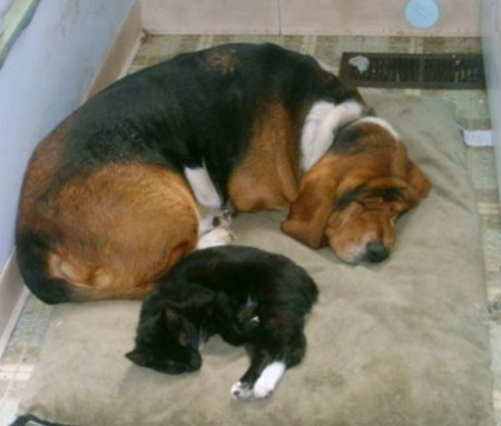 Dog and cat lying together.