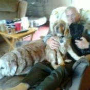 Reuse Sofa Cushions As A Pet Bed