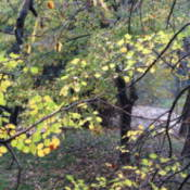 Leafy trees.