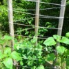 A trellis with wood poles and rope, for training beans.